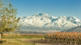 mendoza-vineyards-in-argentina-1600x9001